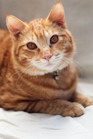 10 dôvodov prečo si adoptovať dospelú mačku